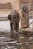 Zoo Hannover_240818_IMG_7724