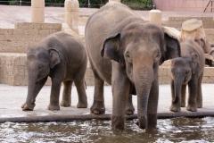 Zoo Hannover_240818_IMG_7726