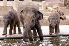 Zoo Hannover_240818_IMG_7727