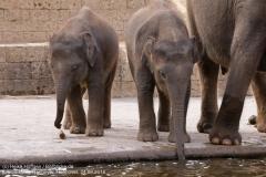Zoo Hannover_240818_IMG_7733
