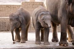 Zoo Hannover_240818_IMG_7735