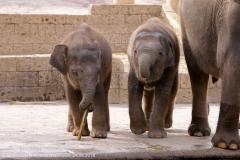 Zoo Hannover_240818_IMG_7740