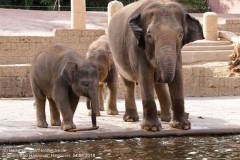 Zoo Hannover_240818_IMG_7741