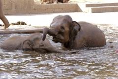 Zoo Hannover_240818_IMG_7779