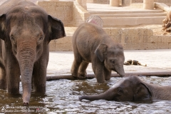 Zoo Hannover_240818_IMG_7780