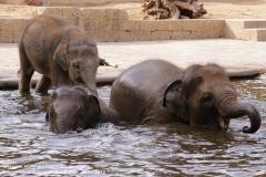 Zoo Hannover_240818_IMG_7781