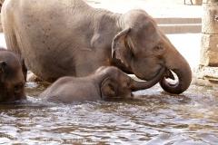 Zoo Hannover_240818_IMG_7792