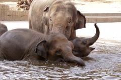 Zoo Hannover_240818_IMG_7797