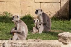 Zoo Hannover_240818_IMG_7803