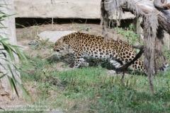 Zoo Hannover_240818_IMG_7808