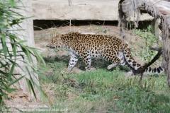 Zoo Hannover_240818_IMG_7809