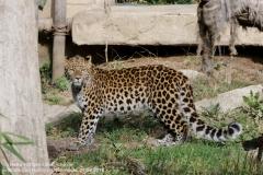 Zoo Hannover_240818_IMG_7810