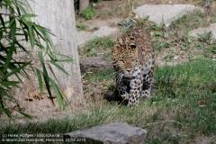 Zoo Hannover_240818_IMG_7815