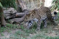 Zoo Hannover_240818_IMG_7817
