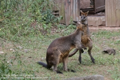 Zoo Hannover_240818_IMG_7842
