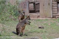 Zoo Hannover_240818_IMG_7844