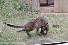 Zoo Hannover_240818_IMG_7854