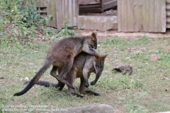 Zoo Hannover_240818_IMG_7855