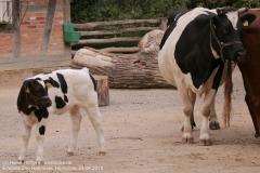 Zoo Hannover_240818_IMG_7868