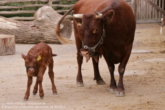 Zoo Hannover_240818_IMG_7869