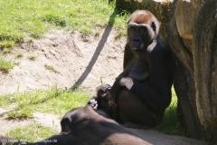 Zoo_Hannover_260517_IMG_7030