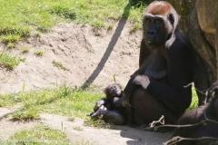 Zoo_Hannover_260517_IMG_7032