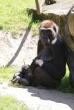 Zoo_Hannover_260517_IMG_7040