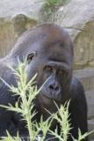 Zoo_Hannover_260517_IMG_7077