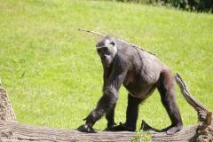 Zoo_Hannover_260517_IMG_7081