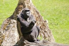 Zoo_Hannover_260517_IMG_7082