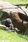 Zoo_Hannover_260517_IMG_7091