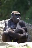Zoo_Hannover_260517_IMG_7100