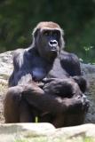 Zoo_Hannover_260517_IMG_7104