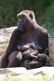 Zoo_Hannover_260517_IMG_7118