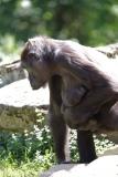 Zoo_Hannover_260517_IMG_7127