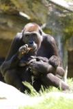 Zoo_Hannover_260517_IMG_7133