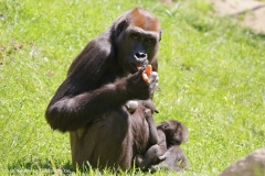 Zoo_Hannover_260517_IMG_7143