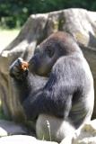Zoo_Hannover_260517_IMG_7158