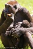 Zoo_Hannover_260517_IMG_7165