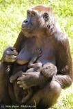 Zoo_Hannover_260517_IMG_7174