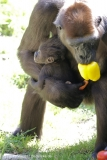 Zoo_Hannover_260517_IMG_7210
