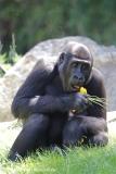 Zoo_Hannover_260517_IMG_7213