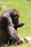 Zoo_Hannover_260517_IMG_7216