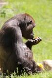 Zoo_Hannover_260517_IMG_7221