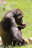 Zoo_Hannover_260517_IMG_7224
