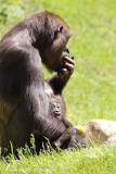 Zoo_Hannover_260517_IMG_7230