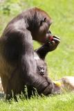 Zoo_Hannover_260517_IMG_7232