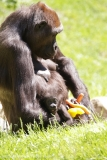 Zoo_Hannover_260517_IMG_7238