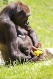 Zoo_Hannover_260517_IMG_7239