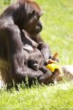 Zoo_Hannover_260517_IMG_7242